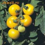 "Seminte rosii galbene ""Golden Sunburst"""