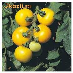 Seminte rosii galbene