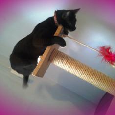 2 in 1: jucarie pentru pisica si turn pentru ascutit gherutele, Jucarii