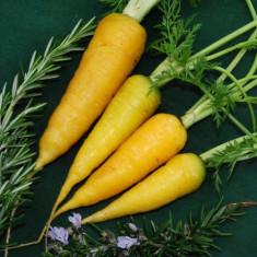 Seminte Morcovi Galbene