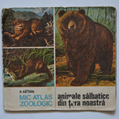 Carte de povesti - MIC ATLAS ZOOLOGIC ANIMALE SALBATICE DIN TARA NOASTRA - N. Saftoiu - 1986