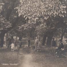 BREAZA, BREAZA DE SUS-ALEEA NUCILOR, CIRCULATA IAN. ''932 - Carte Postala Muntenia dupa 1918, Fotografie