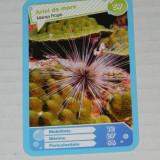 CARTONASE MEGA IMAGE - COMORILE OCEANELOR NR 57 - Cartonas de colectie