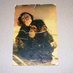 Maimute - ANIMALE - NATURA - necirculata anii 1980 - AFRICA - 2+1 gratis toate produsele la pret fix - RBK7664