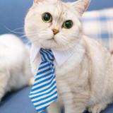Cravata pt. pisica / catel haina pisici catei caini costum caine catelus +CADOU!
