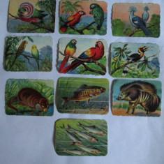 Cartonas de colectie - LOT 10 CARTONASE SCOLARE ANIMALE SALBATICE, PASARI SI PESTI 6 X 8 CM DIN ANII 30