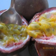 MARACUJA (passiflora edulis) - ARBUST FRUCTIFER EXOTIC - plic cu 20 seminte
