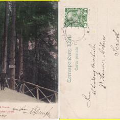 Vatra Dornei (Bucovina, Suceava)- clasica - Carte Postala Bucovina pana la 1904, Circulata, Printata