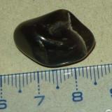 Piatra semipretioasa - zodiacala - mineraloterapie - 2+1 gratis - RBK18036 - Fosila roca