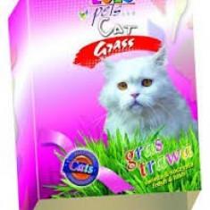 Mancare pisici - IARBA PENTRU PISICI