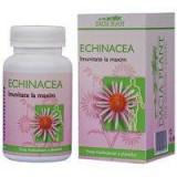 ECHINACEEA FORTE 60CPR 1+1 GRATIS DACIA PLANT
