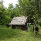 Teren+casa de vacanta Bujoru, Jud Hunedoara - Casa de vanzare, 15 mp, Numar camere: 1, Suprafata teren: 2000