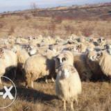 vand animale ,oi si capre